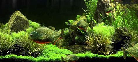 real aquarium  wallpaper gallery