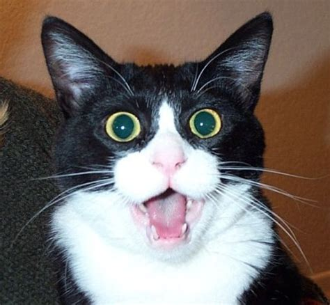 cat shocked snowden leaks journalism textbook media shocked at