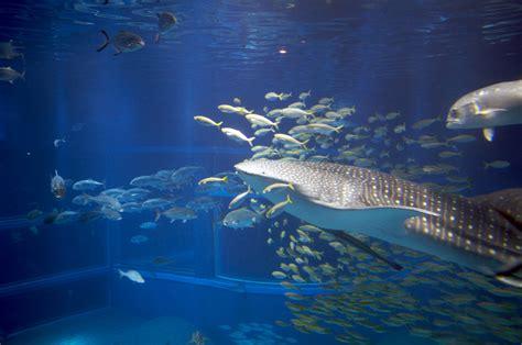 osaka aquarium kaiyukan japan zoo map thousandwonders