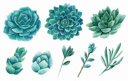Watercolor Clip Succulents Clipart Cactus Vector Flower