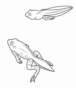Tadpole and Froglet coloring page | Free Printable ...