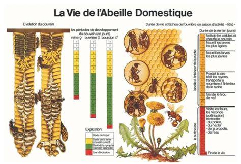 comment vivent les abeilles