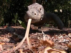World's Biggest Lizard