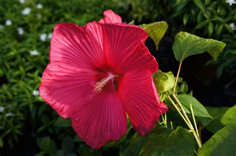 pictures of flowers and plants flowering and non flowering plants welcome to surea s blog
