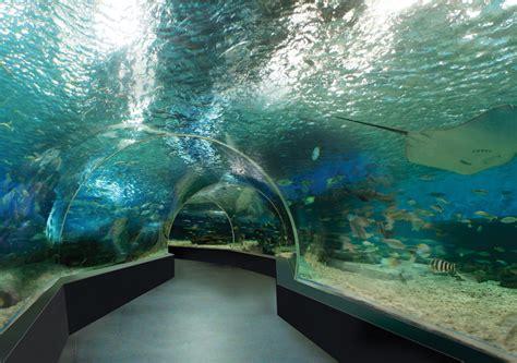 sea aquarium entrance fee skegness image gallery oceanarium manila park