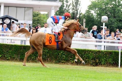 foto de :: polskiearaby com :: portal miłośników koni arabskich