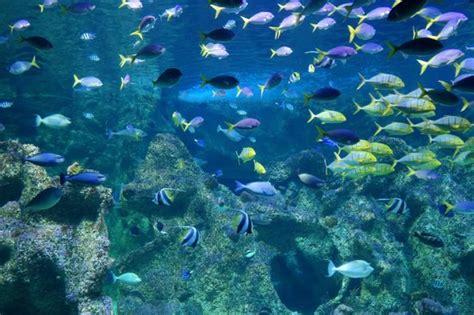 sea sydney aquarium picture of sea sydney aquarium sydney tripadvisor