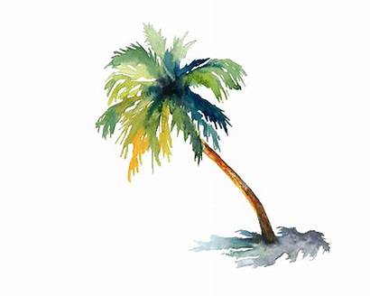 Palm Watercolor Tree Trees Painting Tattoo Beach