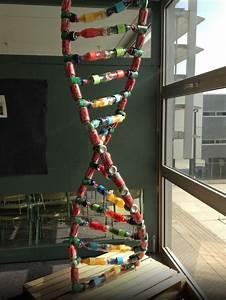 DNA model project | DNA-RNA | Pinterest | Models, Dna and ...