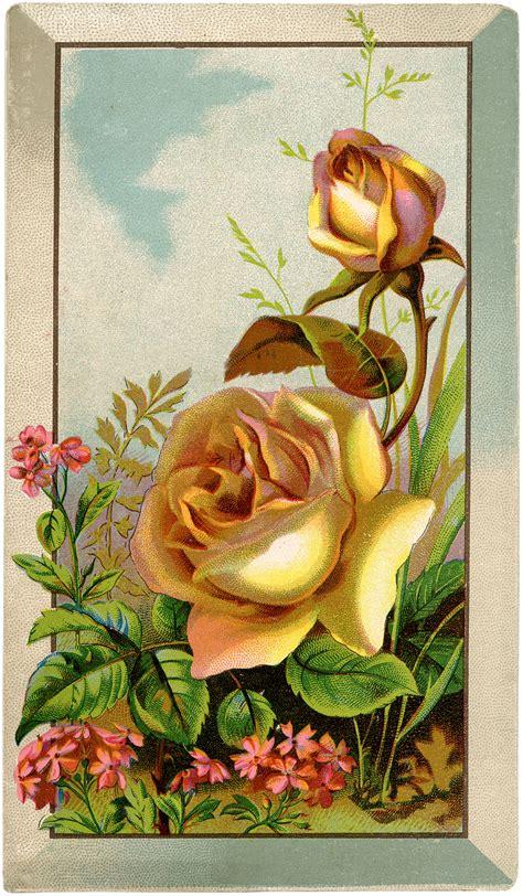 roses digital   graphics fairy