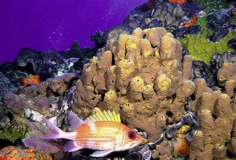 flower gardens diving 3 popular dive destinations in the gulf of mexico
