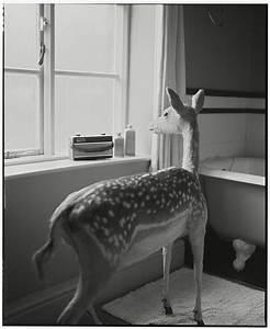 Deer In The Bathroom-2  Medium