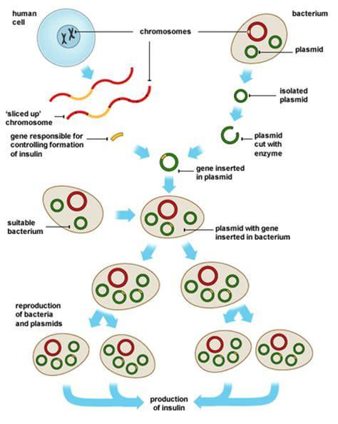 genetic engineering biology notes  igcse