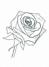 Coloring Rose Pages Printable Sheet Compass Colornimbus Detailed Roses Flower Getdrawings Flowers sketch template