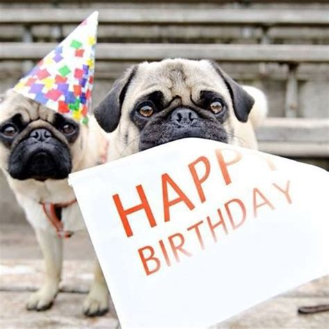 Happy Birthday Pug Meme - pug happy birthday meme generator