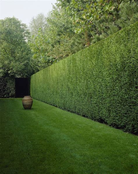 hedge gardens 17 best ideas about garden hedges on pinterest hedges hedges landscaping and hedging plants