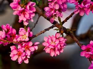 Beautiful Pink Flower Bouquet