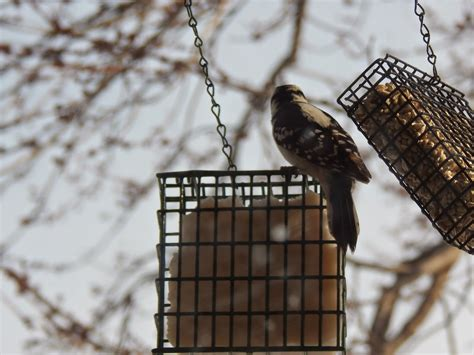 Backyard Birds Omaha by Eat The From The Great Backyard Bird Count