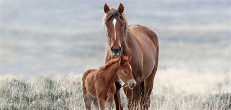 wild horses horse aspca burros toward congress promising advances strategy burro program overhaul desperately representatives critical federal needed took step