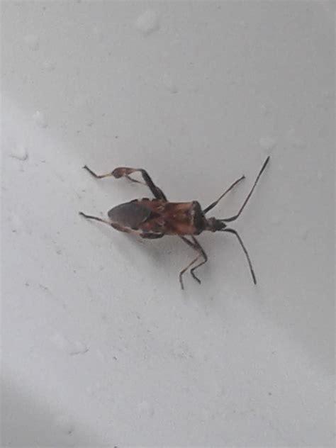 sehr kleine fliegen im zimmer kleine schwarze k 228 fer im schlafzimmer