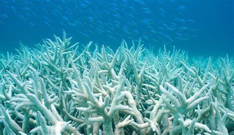 Zemūdene.: Pētījums atklāj lielāko koraļļu izbalēšanu ...