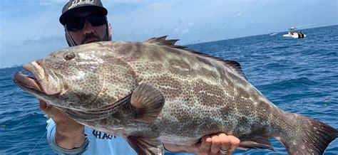 grouper fish florida fishing miami species spp epinephelus catch