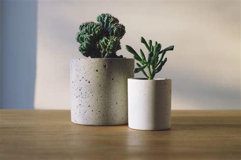 picture green plants cactus pots table