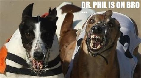 oz greyhound sales blog  funny greyhound memes