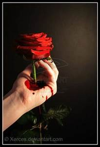 1000+ images about Roses on Pinterest | Black roses ...