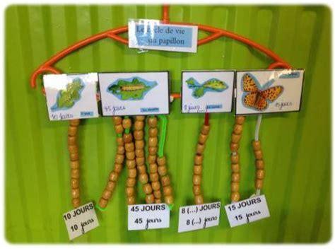 un 233 levage de chenilles et de papillons en classe de