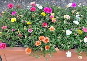 Jardiniere Fleurie Plein Soleil : plantes jardinieres exterieures pivoine etc ~ Melissatoandfro.com Idées de Décoration