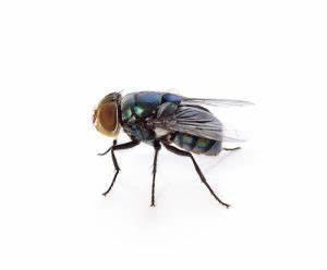 House Flies Indoors? - Colonial Pest Control