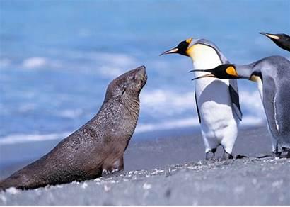Penguins Seal King Fur Glasses 3d Lpc