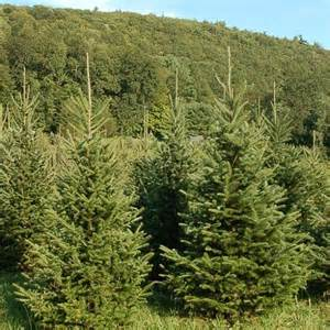 christmas tree farms new hartford ct