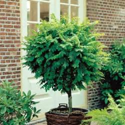 arbre pour petit jardin les vari 233 t 233 s 224 petit d 233 veloppement