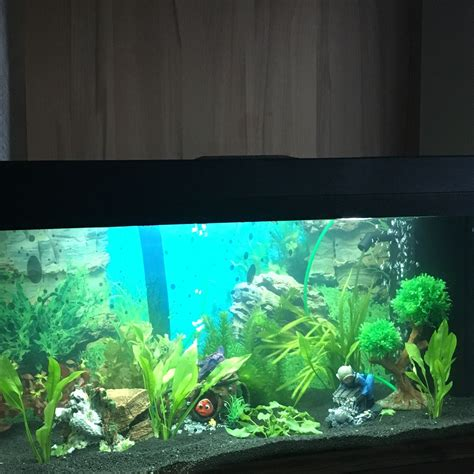 aquarium  welche fische passen gut rein die schoene