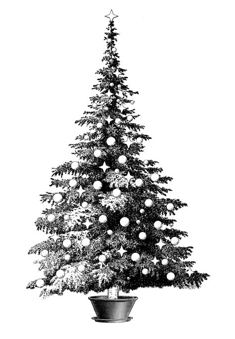 decorated potted pine tree clipart
