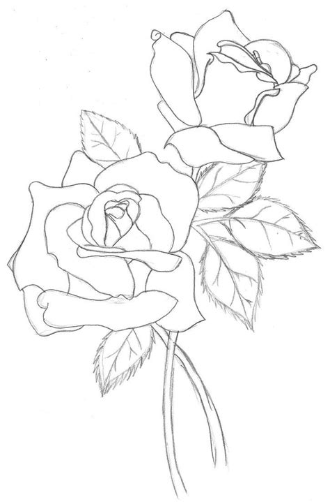 realistic rose drawing outline drawing zwgrafikh