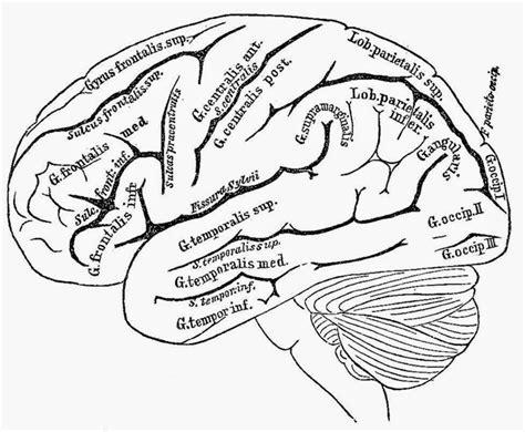 Grey's anatomy essay