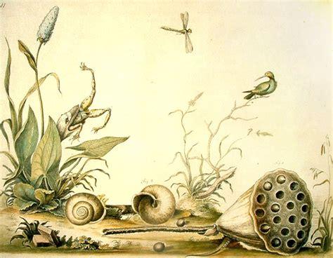 Los naturalistas y el dibujo de la naturaleza Pintura y