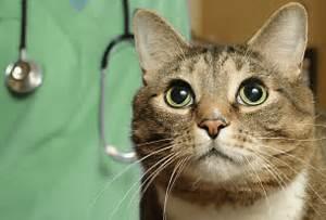 Verkleidung Für Katzen : impfempfehlungen f r katzen ~ Frokenaadalensverden.com Haus und Dekorationen