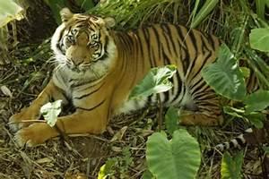 Extinct Rainforest Animals | www.imgkid.com - The Image ...