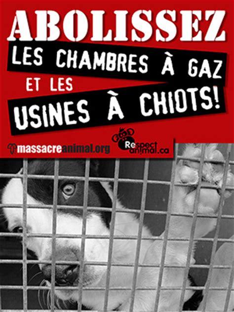 les chambres à gaz animaux de compagnie euthanasie de chiens et chats