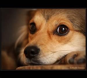 Hund Im Haus : haus hund foto bild tiere haustiere hunde bilder auf ~ Lizthompson.info Haus und Dekorationen