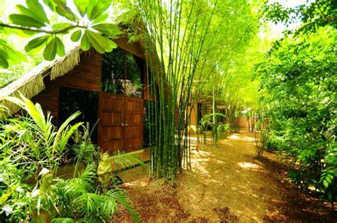 Jardin De Bambou Lyon by Comment Planter Des Bambous Dans Son Jardin Archzine Fr