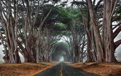 Cypress Road Tree Trees Ancient Jungle Forest