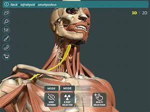 Visual Anatomy 3d