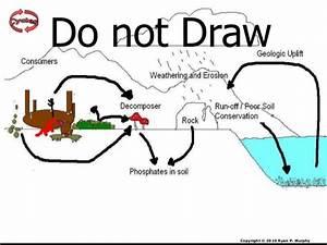 Phosphorus Cycle Lesson PowerPoint, Cycles, Biogeochemical ...