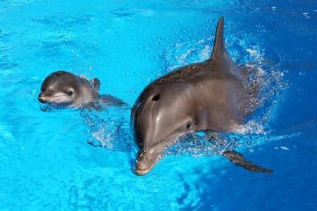 batumi dolphinarium trainer captures rare footage