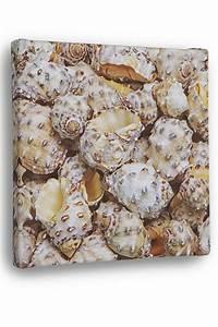 Strandbilder Auf Leinwand : leinwandbild muschelmikro strandbilder strandklassiker strand und k ste deko ~ Watch28wear.com Haus und Dekorationen